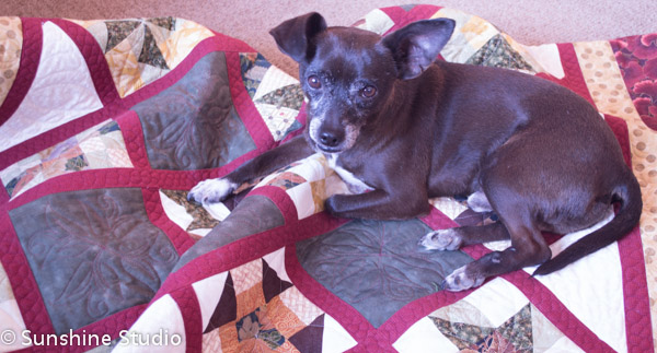 Cocoa on Quilt 2